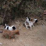 野犬大国ネパール