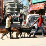 あなたの食卓に並ぶドナドナの光景-ネパールあるある