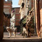 ネパール観光、パタンで最安値のホテルとは